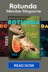 Read the fall twenty sixteen Rotunda Member Magazine featuring a Cuban anole on the cover